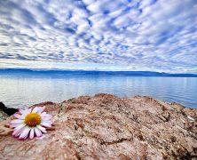 Jeux de fleurs – Lac Léman – 032020