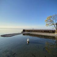 Méditation au bord du lac Léman – 032020